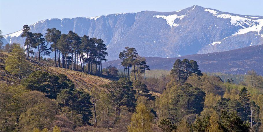 Lochnagar On Royal Deeside T03417606jhp